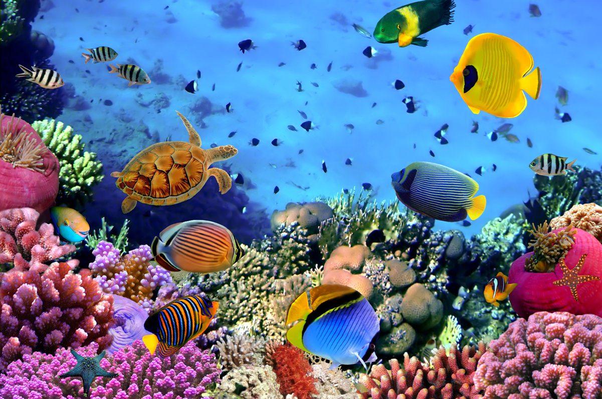 красивые рыбы на сейшелах